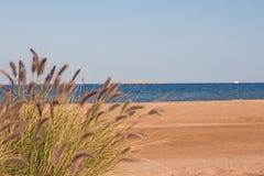 Буш на пляже моря Стоковые Фото