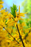 Буш с красивым желтым цветом Стоковая Фотография