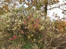 Буш с красными цветками стоковые изображения rf