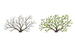 Буш с листьями и снаружи на белой предпосылке Буш на различных сезонах года иллюстрация штока