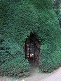 Буш Стоковое фото RF