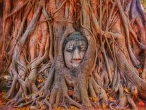 Будда внутри Стоковое Изображение RF