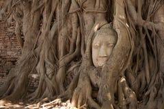 Будда возглавляет статую в Phra Nakhon Si Ayutthaya Таиланде Стоковые Изображения RF