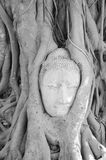 Будда # искусство Стоковое Фото