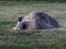 Будда и камень в дворе Стоковые Изображения RF