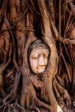Будда смотрит на в дереве, Таиланде Стоковая Фотография