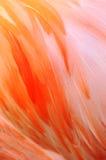 будет отцом фламингоа Стоковое Изображение RF