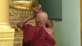 Буддийский монах с оранжевой робой молит в виске при сжиманные руки видеоматериал