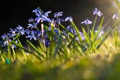 будить весну стоковые фотографии rf