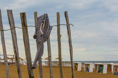 Будить на пляже Стоковое Изображение RF