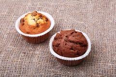 Булочки голубики и шоколада в бумажном держателе пирожного Стоковое Изображение