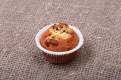 Булочки голубики и шоколада в бумажном держателе пирожного Стоковые Изображения