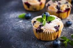Булочки голубики с напудренным сахаром и свежей ягодой Стоковая Фотография