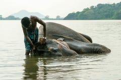 Будучи помытым слон стоковая фотография rf