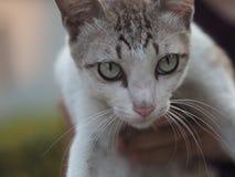 Будучи придержанным кот Стоковые Изображения