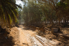 Будущий парк в Sidi Ifni, Марокко Стоковая Фотография RF