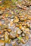 Булыжник в реке стоковые изображения
