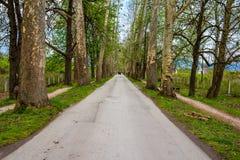 Бульвар дерева в Vrelo Bosne в Сараеве Стоковые Фотографии RF