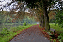 Бульвар деревьев Стоковое фото RF