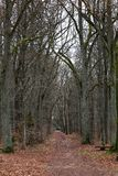 Бульвар осени в лесе Стоковое Изображение