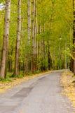 Бульвар осени в парке Стоковая Фотография