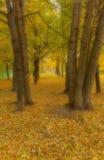Бульвар осени в помохе тумана Стоковое Фото