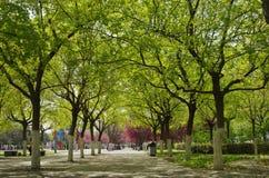 Бульвар парка весной Стоковое Фото