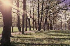 Бульвар дуба, тени от солнца и лучи через ветви, Стоковые Фото