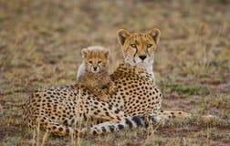 Будьте матерью гепарда и ее новичка в саванне Кения Танзания вышесказанного Национальный парк serengeti Maasai Mara Стоковая Фотография RF
