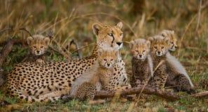 Будьте матерью гепарда и ее новичков в саванне Кения Танзания вышесказанного Национальный парк serengeti Maasai Mara Стоковое Изображение