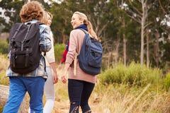 Будьте матерью и 2 дет идя на след леса, задний взгляд Стоковое Изображение