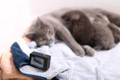 Будьте матерью кота кормя ее младенцев грудью, камеры действия на сцене Стоковые Фото