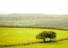будьте фермером ландшафт Стоковое Изображение RF