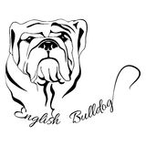 Бульдог головы собаки изолированный английский стоковое изображение rf