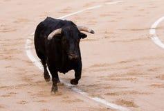 бык Стоковая Фотография RF
