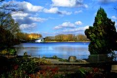 Бык Haarlemmermeerse Стоковое Изображение