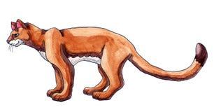 Былинный кугуар акварели бесплатная иллюстрация