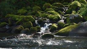 Быстрое река горы в Алтай видеоматериал