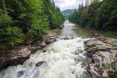 Быстрое река горы в лесе Стоковое Изображение