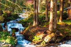 быстрое река горы на предпосылке деревянных дома и деревьев в солнце утра, концепции живой природы, крупного плана Стоковое Изображение