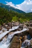 быстрое река Стоковые Изображения RF