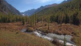 Быстрый малый поток воды бежать через полесье горы сибирское в ландшафте затишья осени видеоматериал