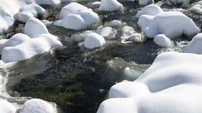 быстрый поток горы среди весны таяние в лесе видеоматериал