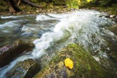 Быстрый пропускать через дикий зеленый поток реки леса горы с кристально ясной водой и яркими желтыми лист на больших влажных вал стоковое изображение rf