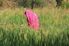 быть фермером женщина стоковая фотография rf