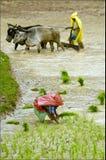 быть фермером муссон стоковое фото