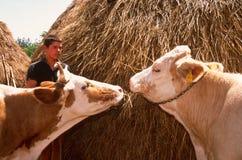 Быть фермером поголовья в Косово. стоковые фото
