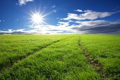 быть фермером пшеница Стоковые Изображения RF