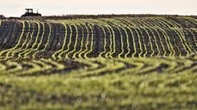 быть фермером plalnted семена рядков Стоковое Изображение