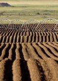 быть фермером plalnted семена рядков Стоковое Фото